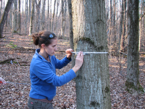 students tree DBH measurement 1
